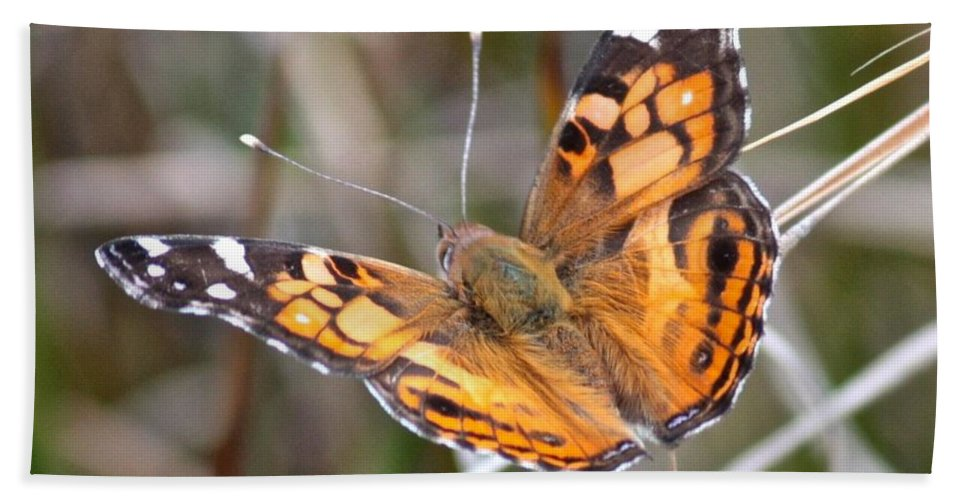 Butterfly Bath Sheet featuring the photograph Painted Lady Square by Carol Groenen