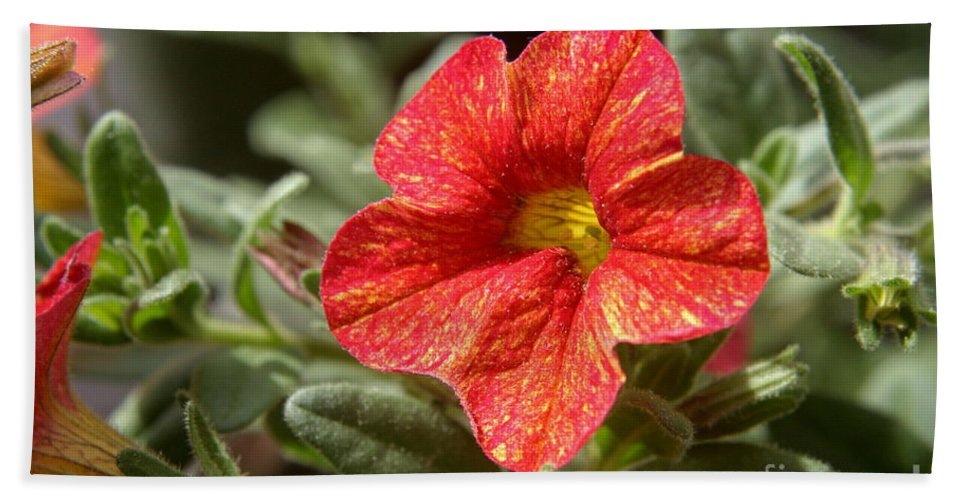 Flower Bath Sheet featuring the photograph Painted Petals by Kenny Glotfelty