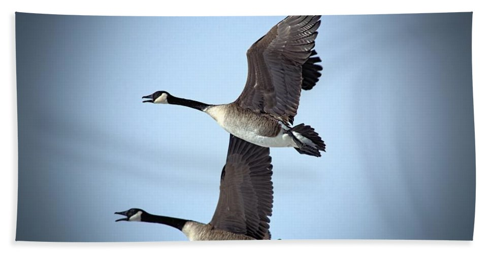 Nature Hand Towel featuring the photograph Pair In Flight by Bonfire Photography