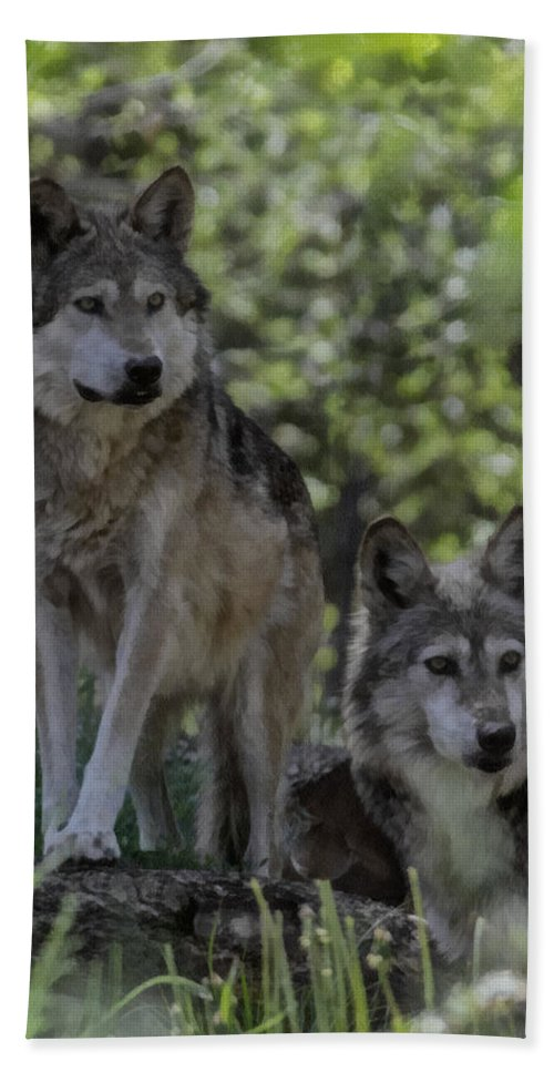 Wolf Hand Towel featuring the digital art Pair Of Wolves by Ernie Echols