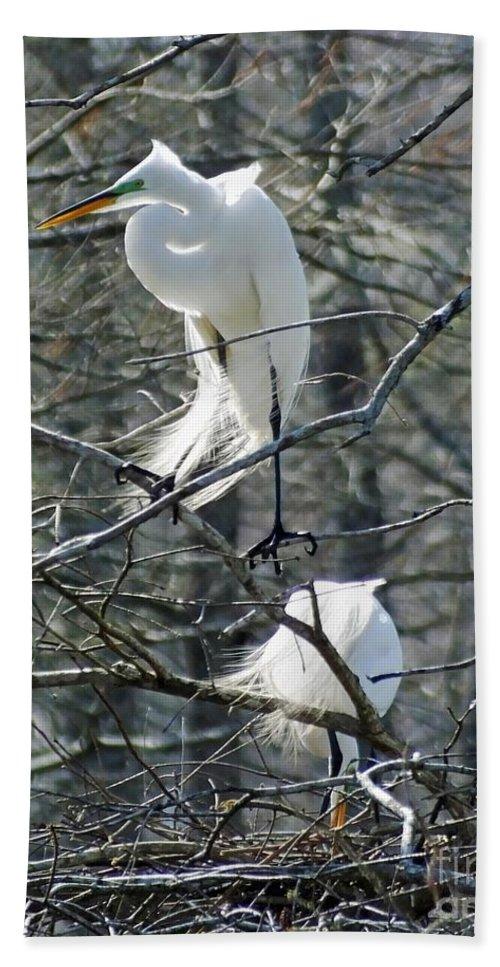Egrets Hand Towel featuring the photograph Paired Egrets At Lake Martin Louisiana by Lizi Beard-Ward