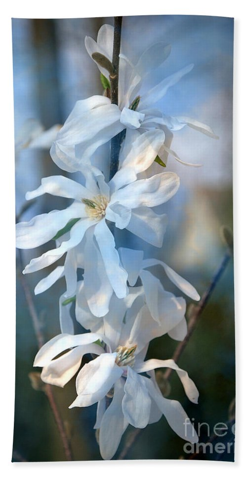 Flowers Hand Towel featuring the photograph Pale Blue by Timothy Hacker