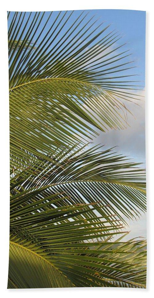 Beach Bath Sheet featuring the photograph Palm Close Up 3 by Anita Burgermeister