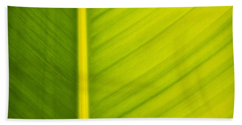 3scape Photos Bath Sheet featuring the photograph Palm Leaf Macro Abstract by Adam Romanowicz