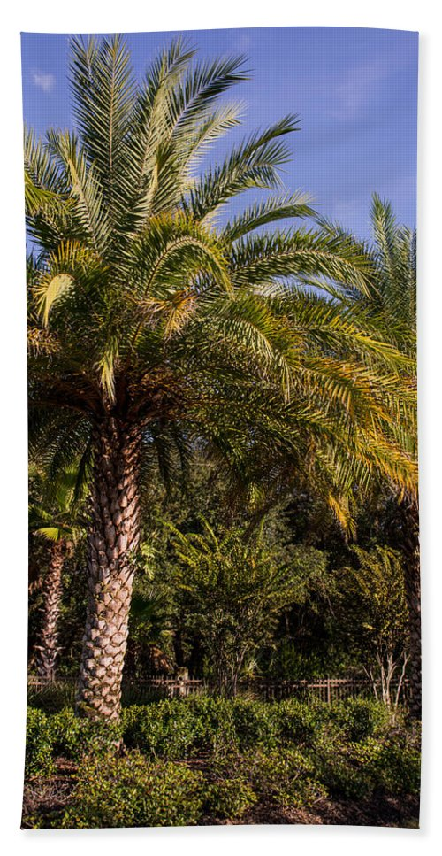 Palm Trees Hand Towel featuring the photograph Palm Tree by Zina Stromberg