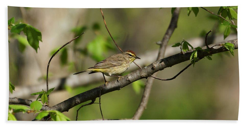 Palm Warbler Hand Towel featuring the photograph Palm Warbler by Sandy Keeton