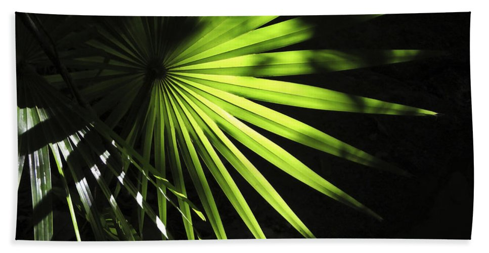 Palmetto Hand Towel featuring the photograph Palmetto And Rays by Marilyn Hunt