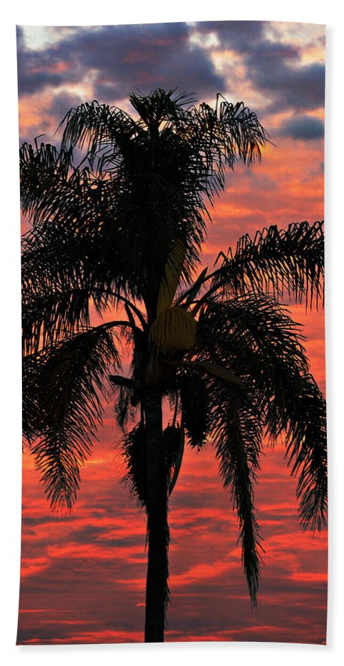 Palm Hand Towel featuring the photograph Palmtree Apocalypse by Joe Schofield