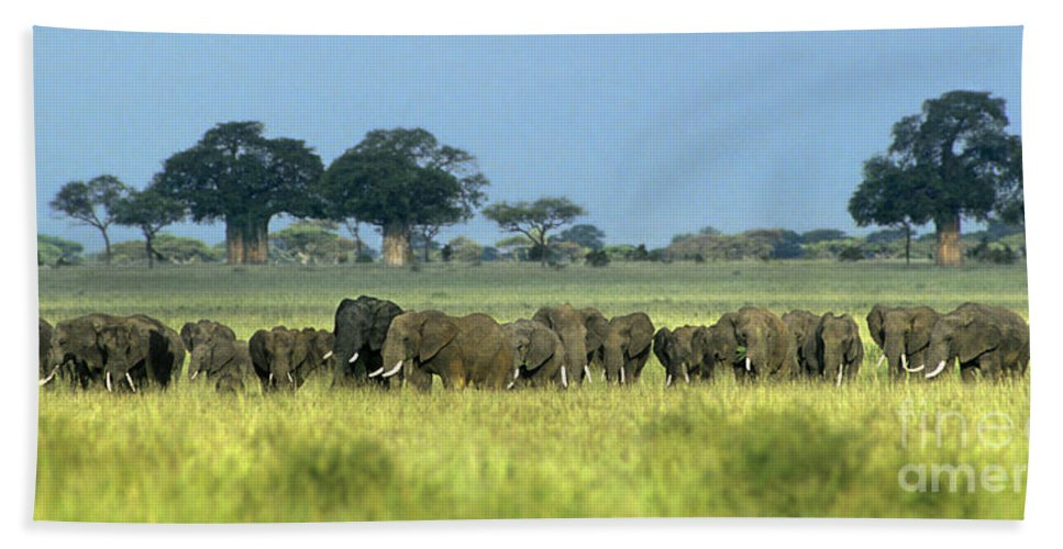 Africa Hand Towel featuring the photograph Panorama African Elephant Herd Endangered Species Tanzania by Dave Welling