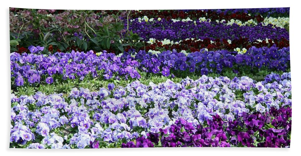 Pansy Bath Sheet featuring the photograph Pansy Field by Christiane Schulze Art And Photography