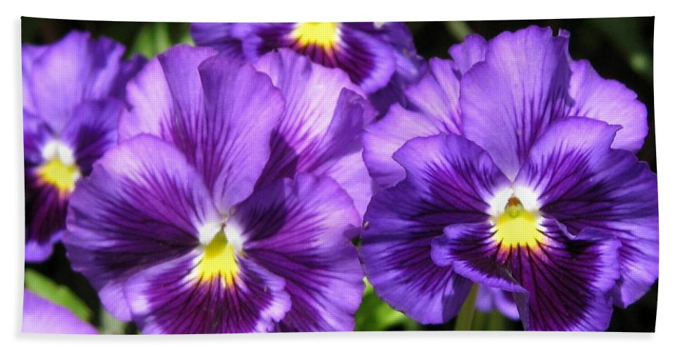 Mccombie Bath Towel featuring the photograph Pansy From The Chalon Supreme Primed Mix by J McCombie