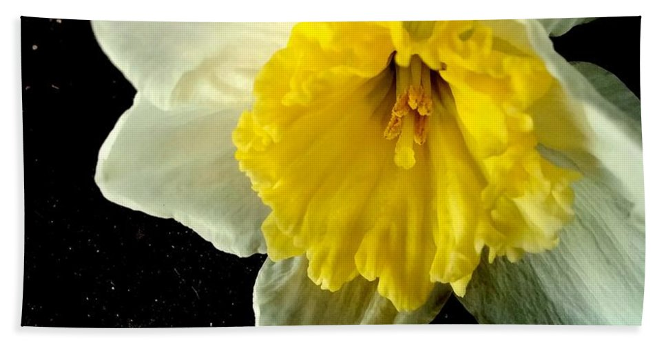 Paper White Daffodil Hand Towel featuring the photograph Paper White Daffodil by Kathy Barney