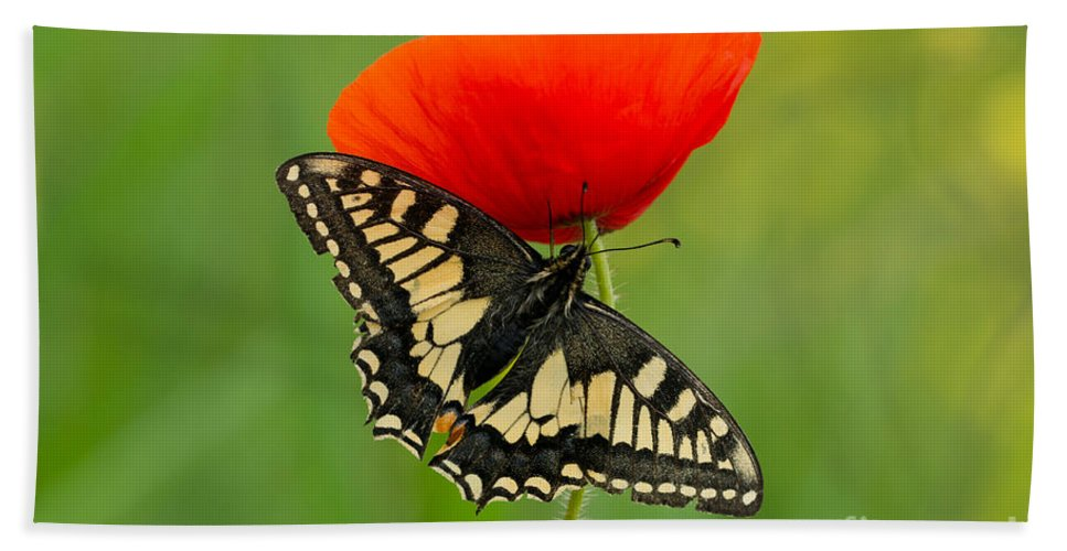 Macro Hand Towel featuring the photograph Papilio Machaon Butterfly Sitting On A Red Poppy by Jaroslaw Blaminsky