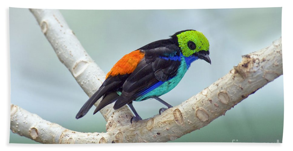 Animal Hand Towel featuring the photograph Paradise Tanager by Anthony Mercieca