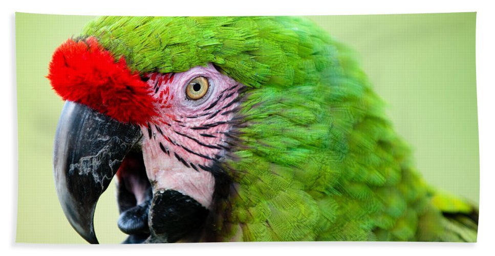 Parrot Hand Towel featuring the photograph Parrot by Sebastian Musial