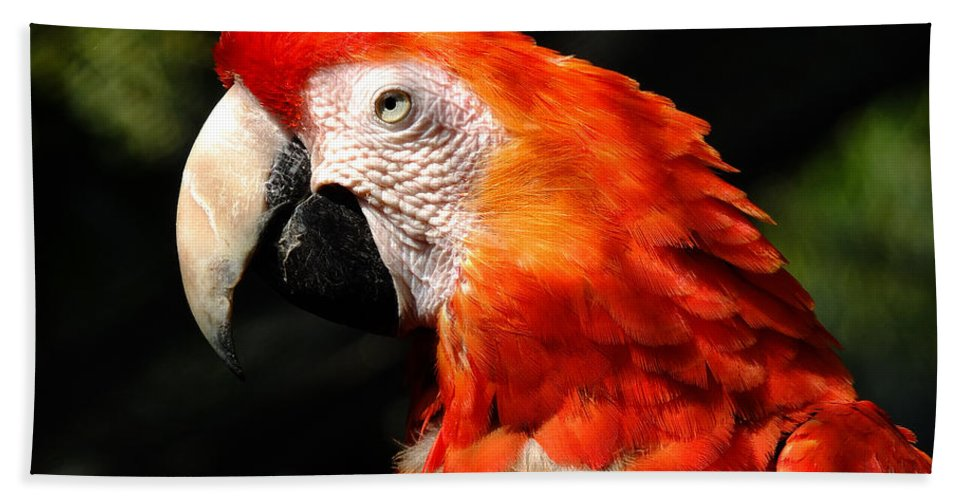Asian Hand Towel featuring the photograph Parrot by TouTouke A Y