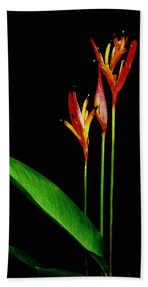 Hawaii Iphone Cases Bath Sheet featuring the photograph Parrots Beak Heliconia by James Temple