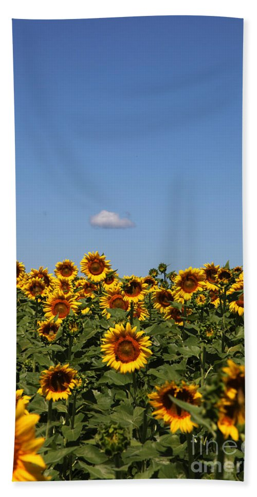 Sunflower Bath Towel featuring the photograph Passing By by Amanda Barcon