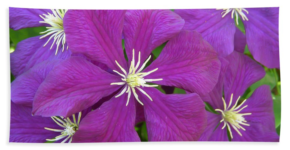 Flower Hand Towel featuring the photograph Passion by Aimee L Maher ALM GALLERY
