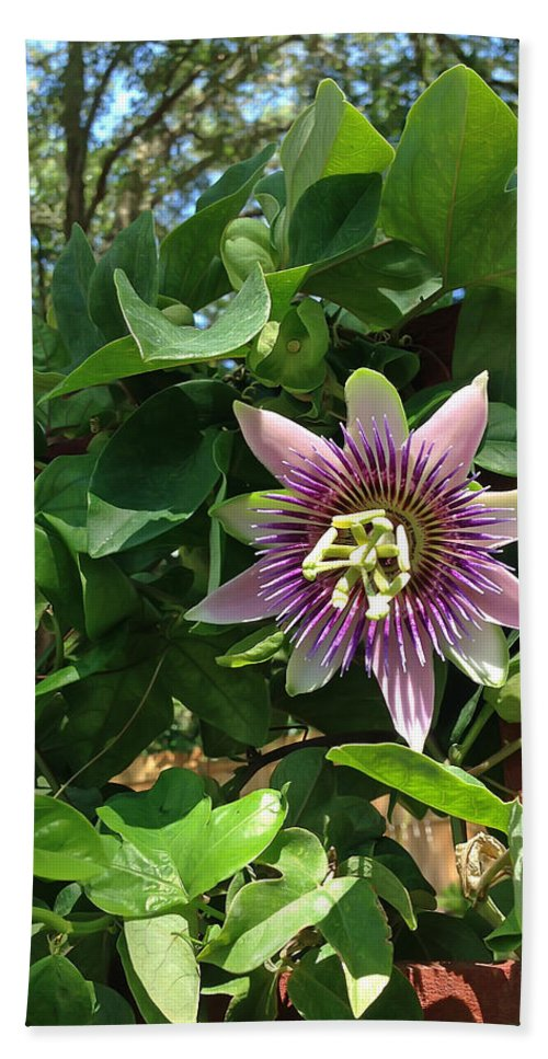 Passion Flower Bath Sheet featuring the photograph Passion Flower 3 by Aimee L Maher ALM GALLERY