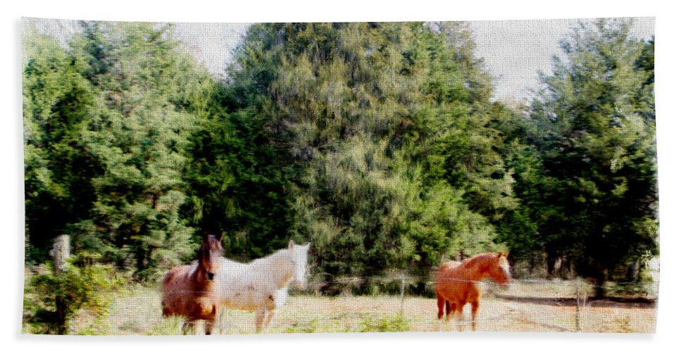 Pasture Hand Towel featuring the photograph Pasture For Three by Ericamaxine Price