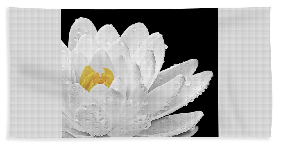 White Waterlily Hand Towel featuring the photograph Patch Of Gold by Gill Billington