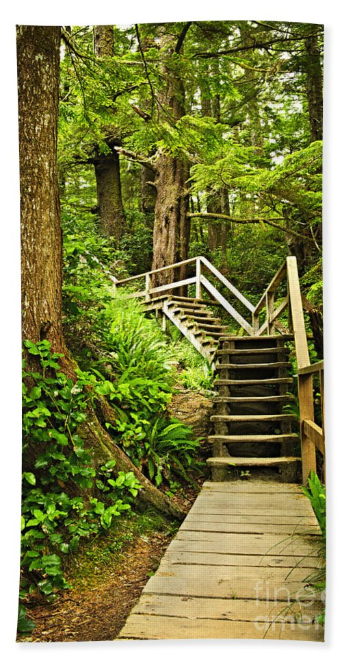 Rainforest Hand Towel featuring the photograph Path In Temperate Rainforest by Elena Elisseeva