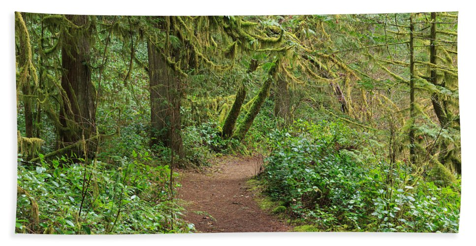 Rainforest Hand Towel featuring the photograph Path Through The Rainforest by Louise Heusinkveld