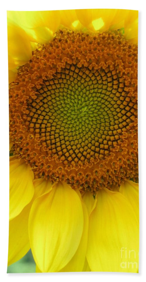 Sunflower Bath Sheet featuring the photograph Patterns of Nature by Laura Corebello