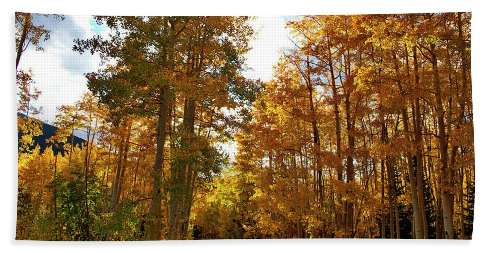 Landscapes Hand Towel featuring the photograph Paved With Gold by Jeremy Rhoades
