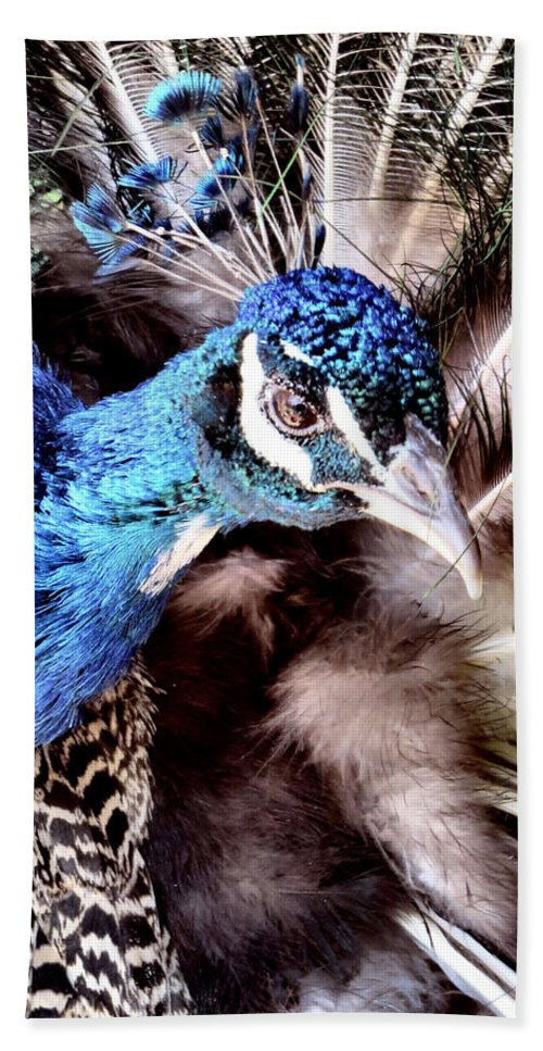 Peacock Bath Sheet featuring the photograph Pea Cock Cock Cock by Art Dingo