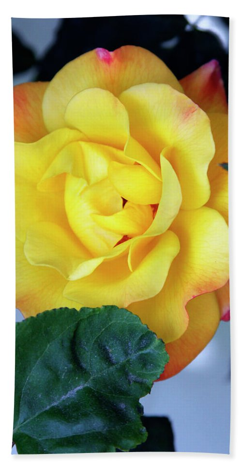 Rose Hand Towel featuring the photograph Peace Rose Palm Springs by William Dey