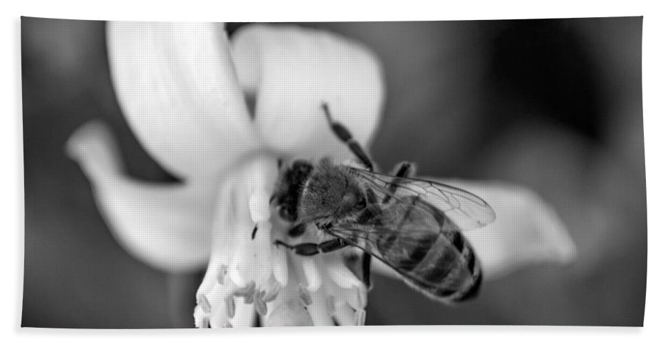 Bee Hand Towel featuring the photograph Peaceful Bee by Anna Burdette