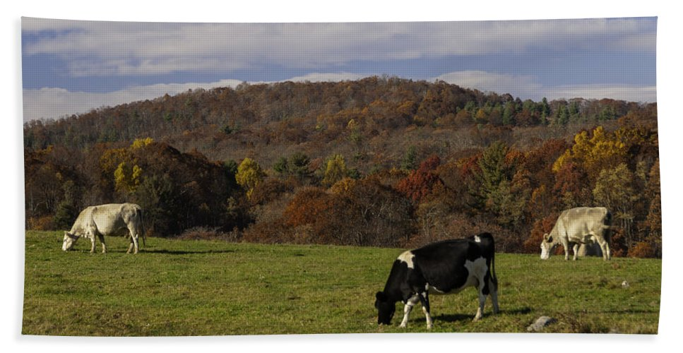 Animals Bath Towel featuring the photograph Peaceful Pasture by Lynn Bauer