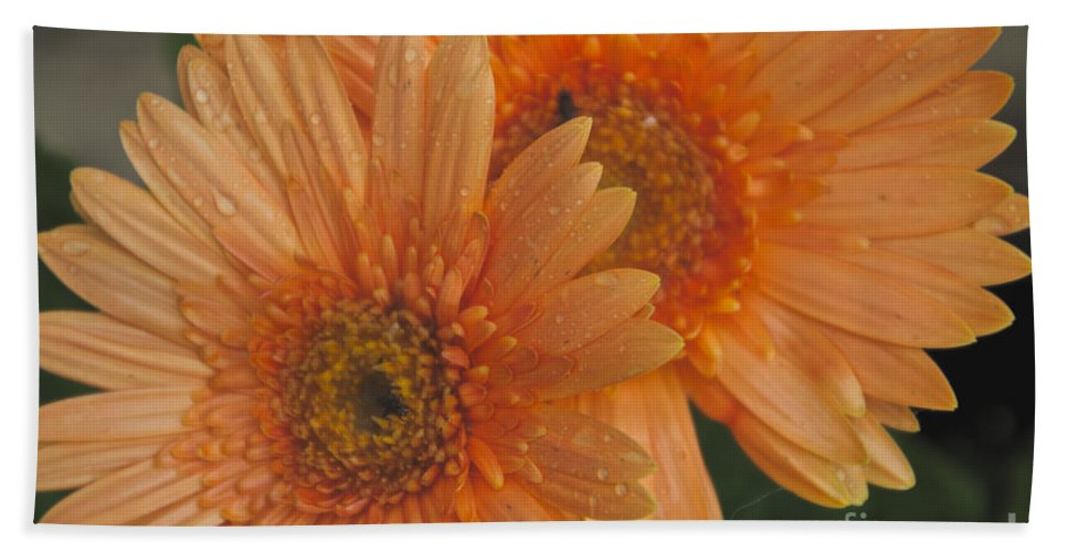 Peach Daisy Bath Sheet featuring the photograph Peach Daisy by William Norton
