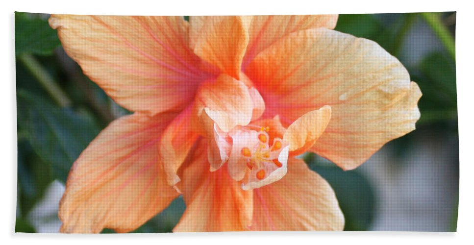 Flowers Hand Towel featuring the photograph Peach by Lee Hartsell