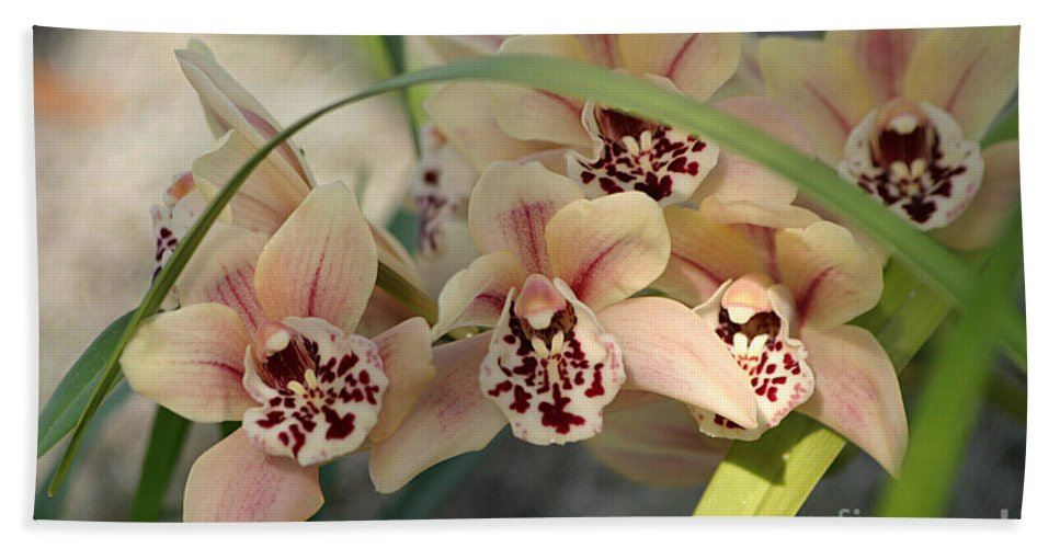 Orchids Hand Towel featuring the photograph Peach Pastel Palette by Living Color Photography Lorraine Lynch