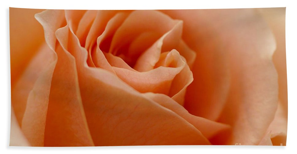 Peach Bath Towel featuring the photograph Peach Rose by Carol Lynch