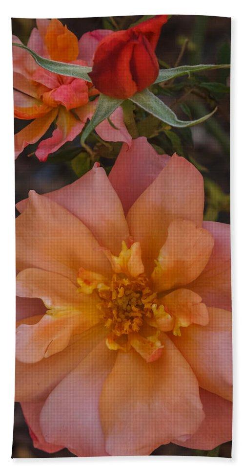 Florida Bath Sheet featuring the photograph Peach Rose by Jane Luxton