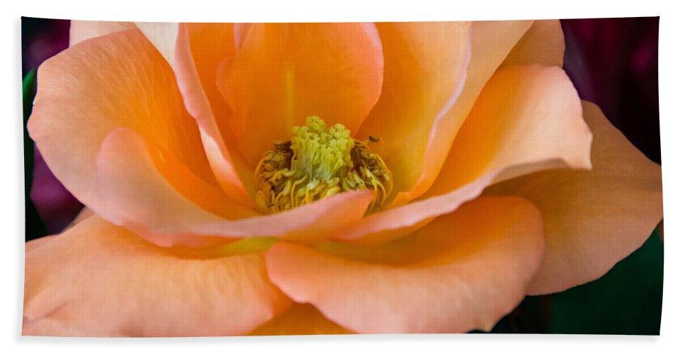 Peach Bath Sheet featuring the photograph Peach Rose by Steve Harrington