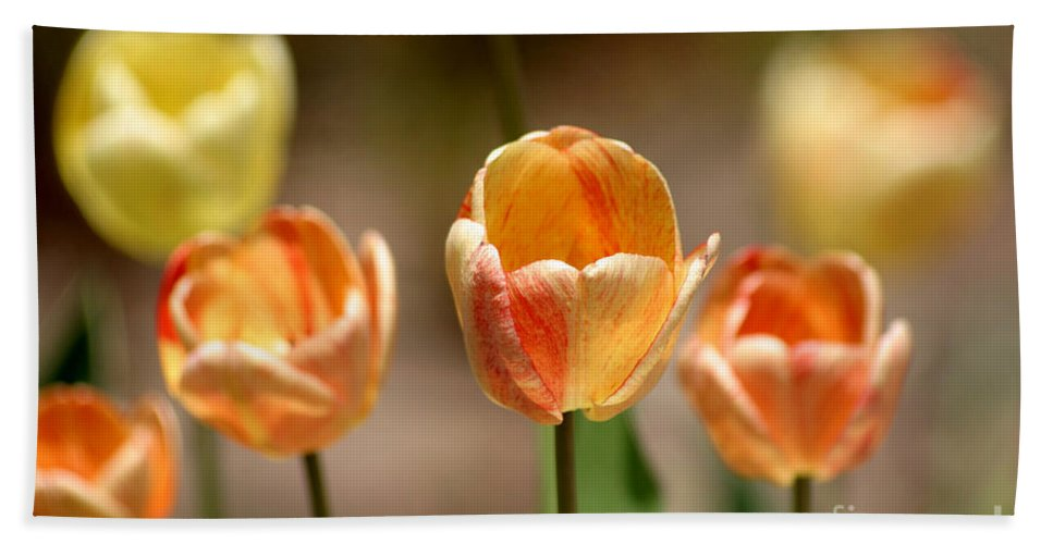 Tulips Hand Towel featuring the photograph Peaches And Cream by Living Color Photography Lorraine Lynch
