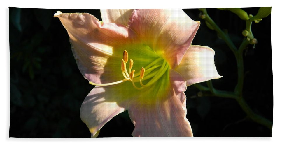 Day Lily Hand Towel featuring the photograph Peaches And Cream by Terri Waselchuk