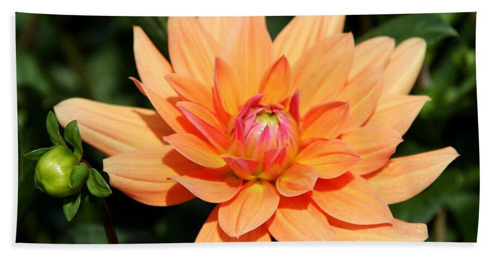 Peachy Dahlia.orange Dahlia Bath Sheet featuring the photograph Peachy Petals by Christiane Schulze Art And Photography
