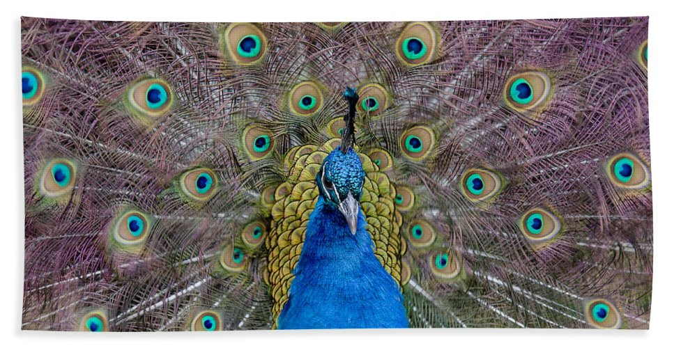 Peacock Hand Towel featuring the photograph Peacock And Proud Plumage by Greg Nyquist