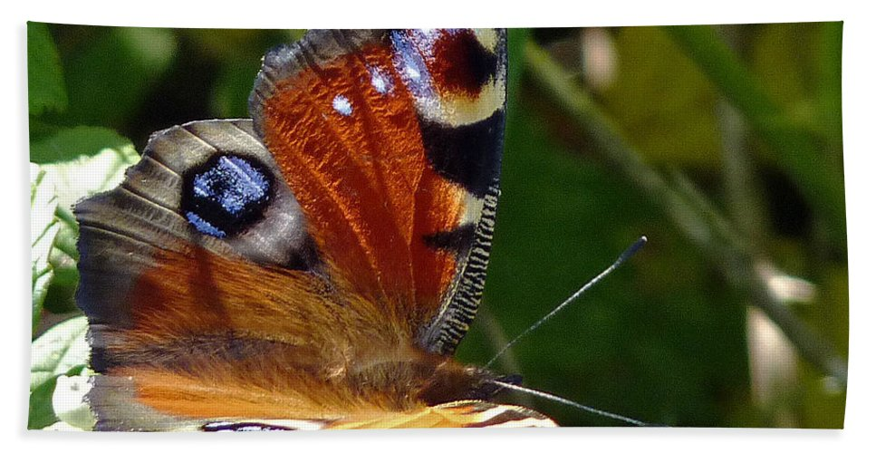 Peacock Butterfly Bath Sheet featuring the photograph Peacock Butterfly by Tony Murtagh