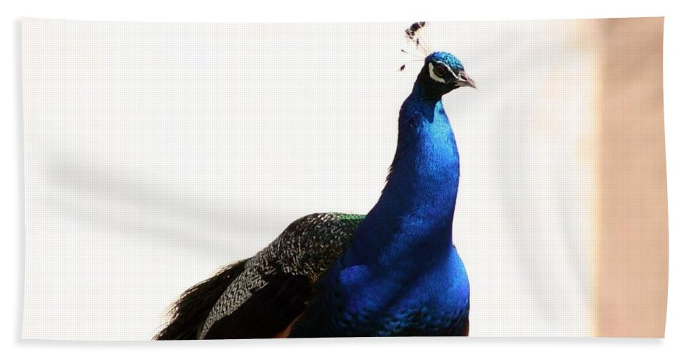 Animal Hand Towel featuring the photograph Peacock I by T Reich