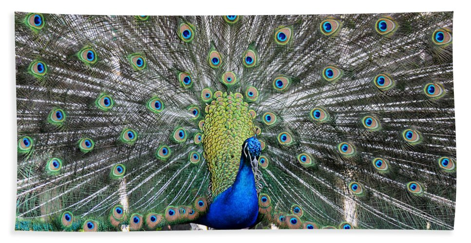 Peacock Hand Towel featuring the photograph Peacock by Tracy Winter