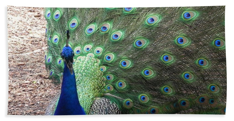 Photography Bath Sheet featuring the photograph Peacock Up Close by Chrisann Ellis