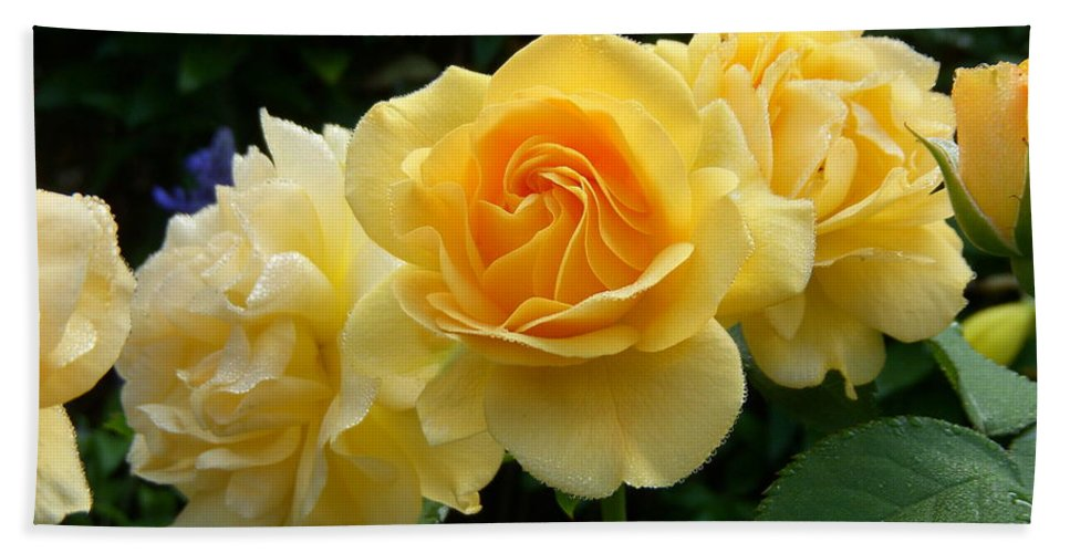 Yellow Roses Bath Sheet featuring the photograph Pearls Of Dew by Terri Waselchuk