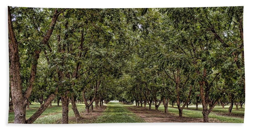 Pecan Orchard Bath Sheet featuring the photograph Pecan Orchard Sahuarita Arizona by Eduardo Palazuelos Romo